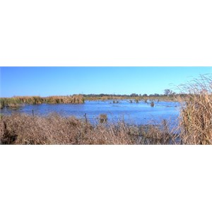 Not all of the Macquarie Marshes is like this.