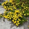 Kangaroo Island Wildflowers – October 2011