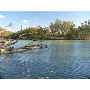 Murray River near Tocumwal