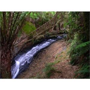 Melba Gully cascade