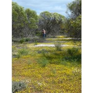 Colourful bush to explore at Canna