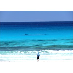 Whales just off the beach at Pt. Ann