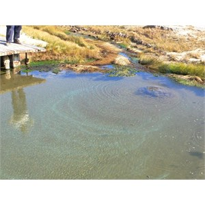 Warm water and gas bubbles make patterns in the mound springs