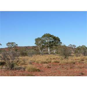 Batton Hill, NE Simpson Desert