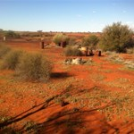 Remnants of airstrip at Dingo Claypan
