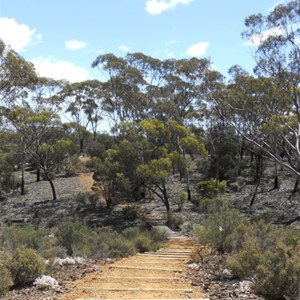 Norseman - Woodlands Walk