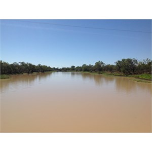 The mighty Thomson River, Longreach