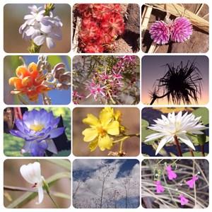 Kimberley Flora