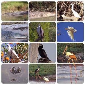 Kakadu animal life