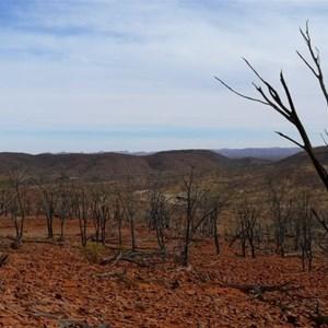 Gawler Ranges - hard country