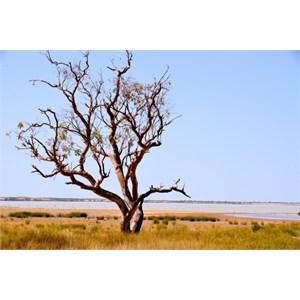 Peery Lake - Paroo Darling NP