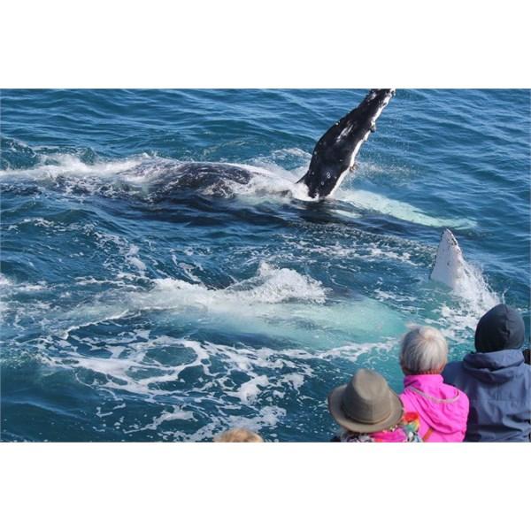 Fraser Island whale watch