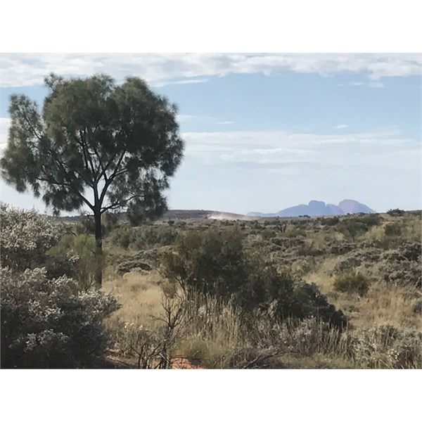 View from sand ridge towards Kata Juta at Bush Camp