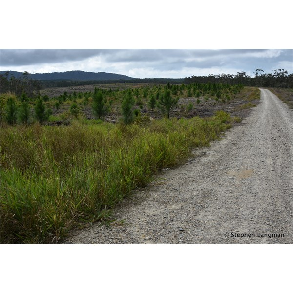 Then around a bend out out of the rainforest and you are into cleared land and planted with pine trees