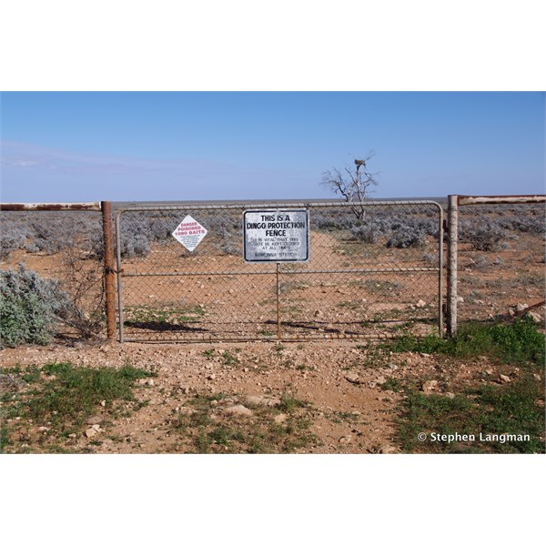 Once you get to the Dingo fence, pass through it and just keep going