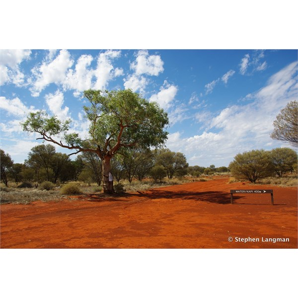 This is the large Len blazed tree mentioned on the map