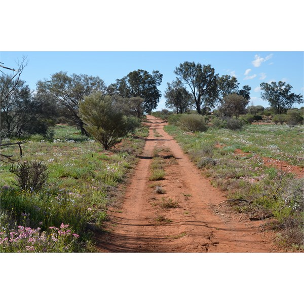 The Emu Road in bloom