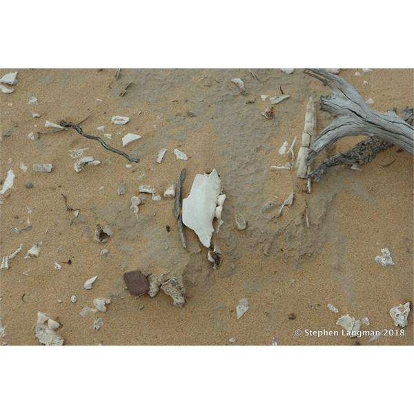 Exposed Aboriginal Grave