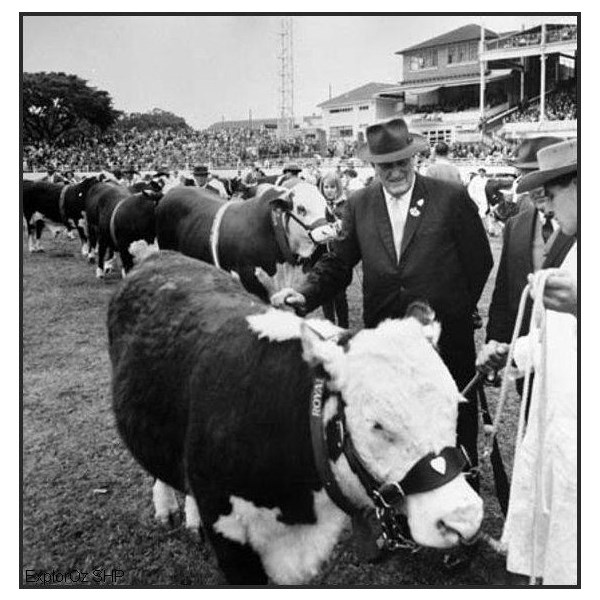 The Premier of Queensland, Mr F. Nicklin inspects a polled hereford cow at the 1966 Ekka