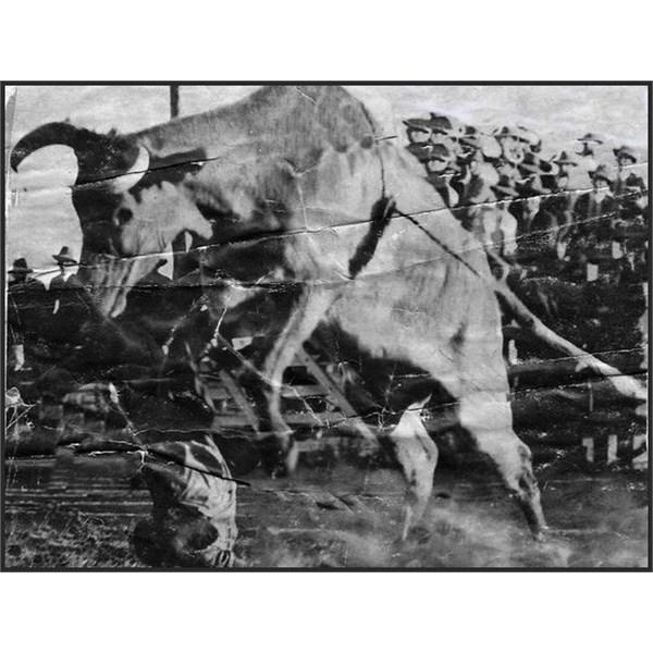 photo from Warwick Rodeo, taken in 1931