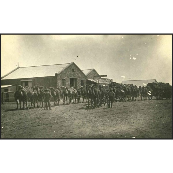 A camel train in front of the old general store in Farina