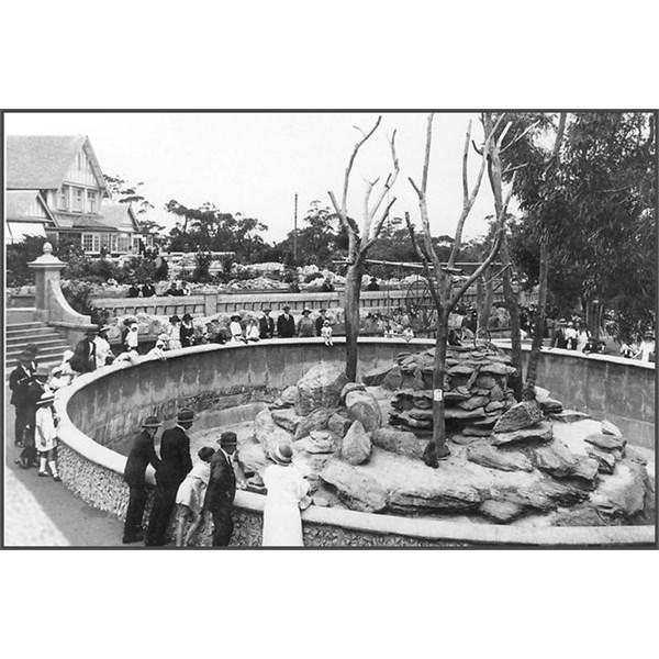 Spider monkeys , Taronga Zoo c1916