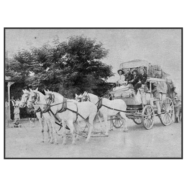 Cobb and Co's Royal Mail coach Richmond  1906 The driver is Mr A E Richards who drove the coach on the Richmond to Cloncurry run