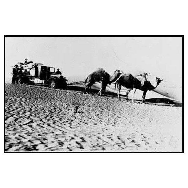 Help from camels on the Maree-Birdsville mail