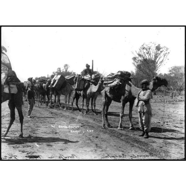 A Camel caravan in Bourke circa 1900