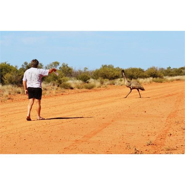 The emu mating ritual