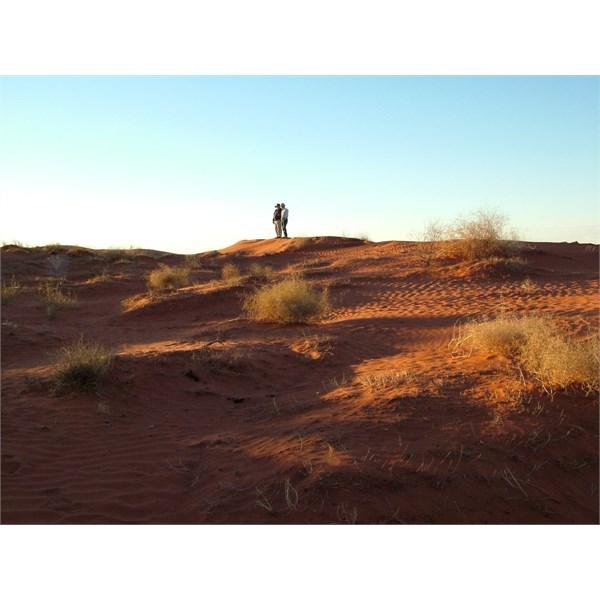 Simpson dune sunset