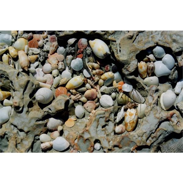 Shells 80 Mile Beach 1998