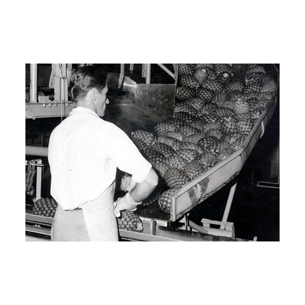 an employee at the Golden Circle pineapple cannery at Northgate, Brisbane in 1963