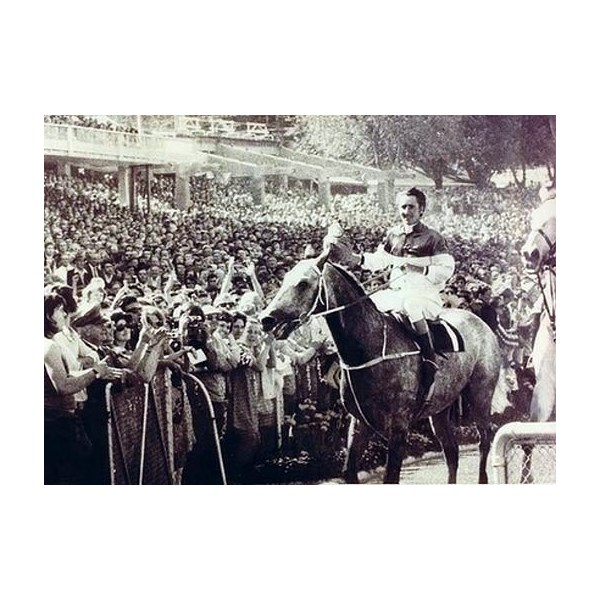 Gunsynd after winning the 1972