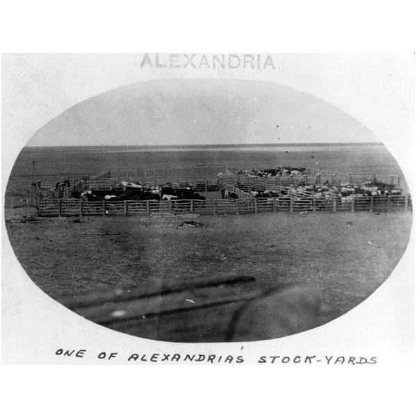 One of the stockyards on Alexandria Station,  1921