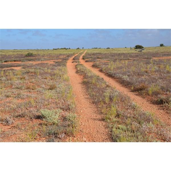 The Caravan Track