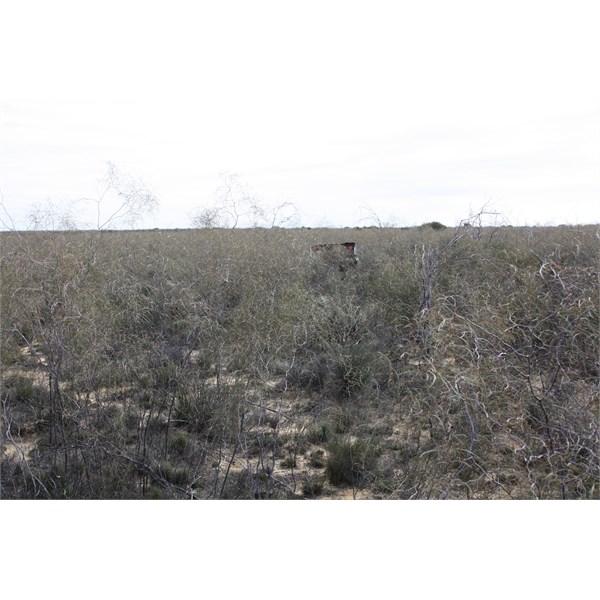 Thick Vegetation