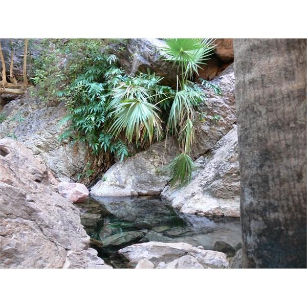 Zebedee Springs 2