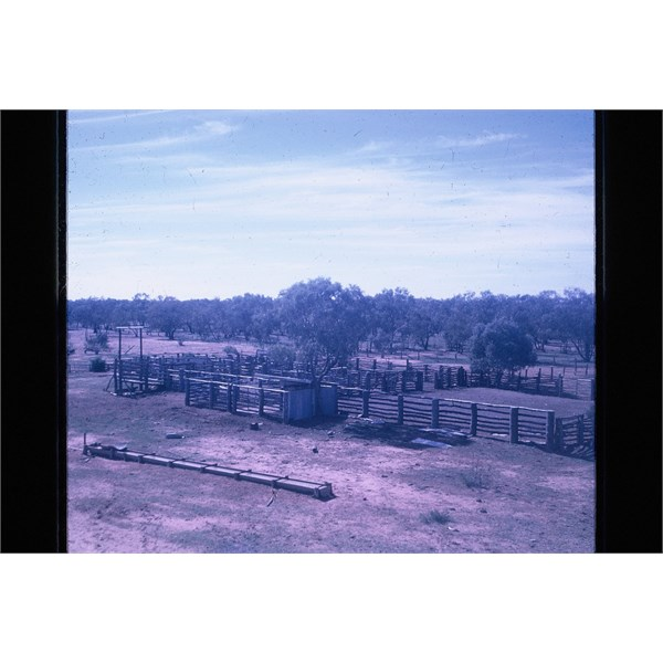 the Caiwarro cattle yards 1968