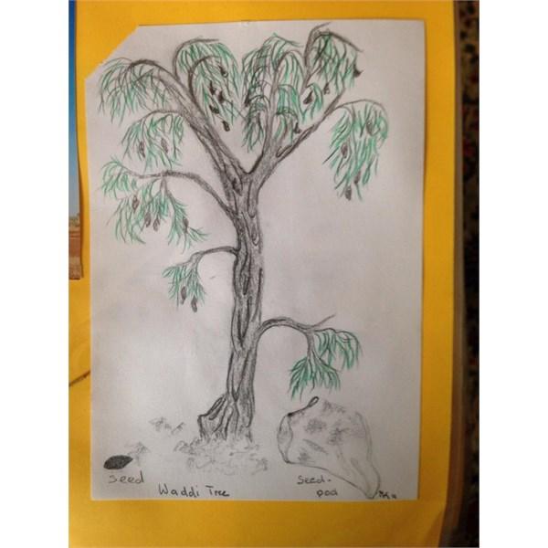 Waddi Tree Art