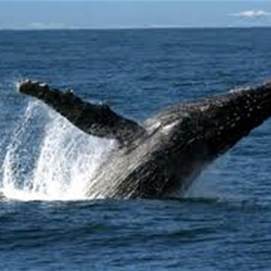 If your lucky you may see a Whale offshore
