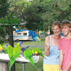 Join in the daily bird feed at Jacobs Well Tourist Park, Gold Coast