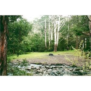 andersons garden
