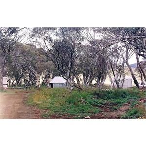 Howitt Plains Camp