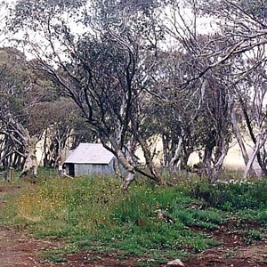Howitt Plains Camp