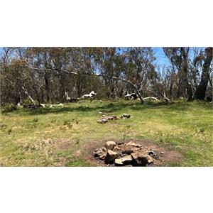 Howitt Plains Top Camp