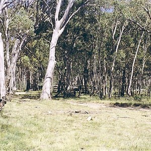 Secluded clearing, Tamboitha Saddle