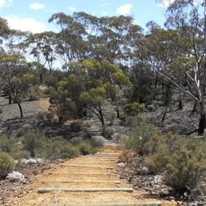 Steep area on woodlands walk trail