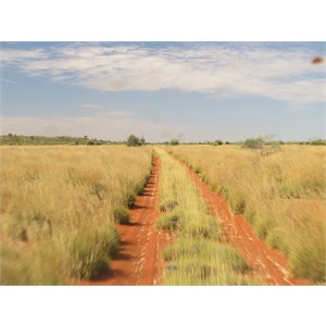 Healthiest spinifex in WA