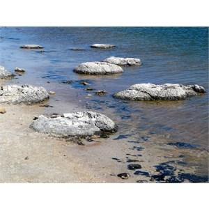 Stromatolites.